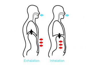 Stress and respiration - abdominal breathing